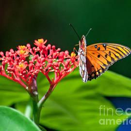 Orange Butterfly by Stephen Whalen
