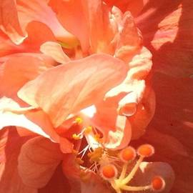 Orange Chroma  by Marilyn Nolan-Johnson