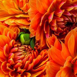 Orange Dahlia Bouquet - Garry Gay