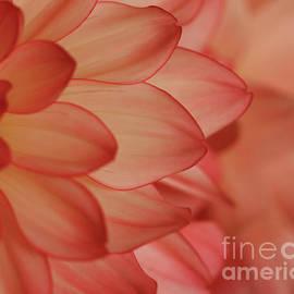 Rachel Cohen - Orange Dahlia Cream