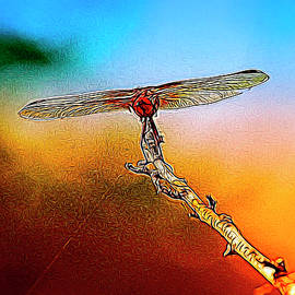 Linda Brody - Orange DragonFly Wings I  Abstract