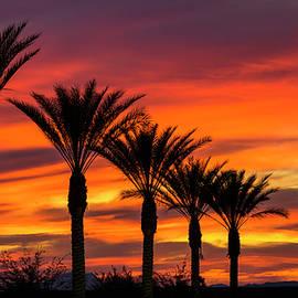 Saija Lehtonen - Orange Dream Palm Sunset