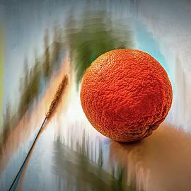 Leif Sohlman - Orange #g4