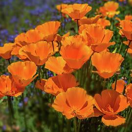 Orange Jubilee - Vertical by Lynn Bauer