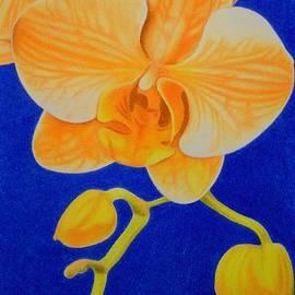 Sharon Patterson - Orange Orchids
