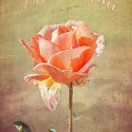 Elaine Teague - Orange Rose