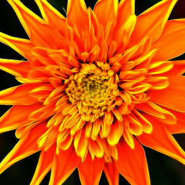 Bill Morgenstern - Orange Star Flower