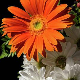 Orange Sunshine with Daisies by Georgia Mizuleva