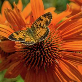Orange, Sweet Orange by Linda Howes