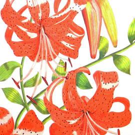 Laura Wilson - Orange Tiger Lilies