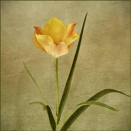 Robert Murray - Orange Tulip