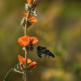 Saija Lehtonen - Orange Wildflowers