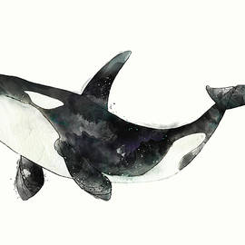 Orca from Arctic and Antarctic Chart by Amy Hamilton