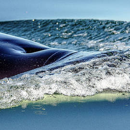 Orca To The Surface by Roxy Hurtubise