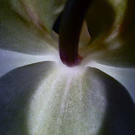 Orchid. by Alexander Vinogradov
