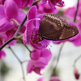 Kume Bryant - Orchid and Butterfly