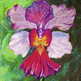 Anne Katzeff - Orchid