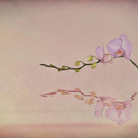 Tom Mc Nemar - Orchid Blooms and Buds