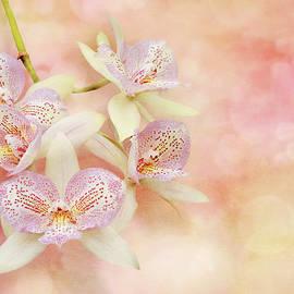 Mike Savad - Orchid - Caulocattleya - The twinkle in my eye