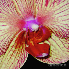 Carol F Austin - Orchid Flower Macro Close Up and Personal