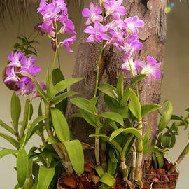 orchid flowers  in Thailand,