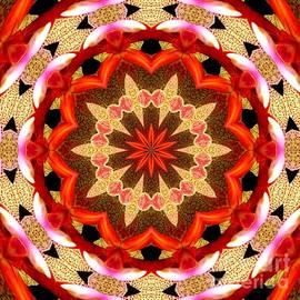 Rose Santuci-Sofranko - Orchid Kaleidoscope 7