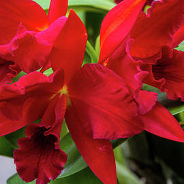 Alana Thrower - Orchid Show 3