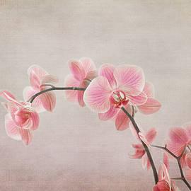 Robert Murray - Orchid spray