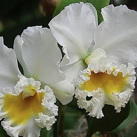 Karen McKenzie McAdoo - Orchids 13