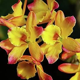 Karen McKenzie McAdoo - Orchids 15