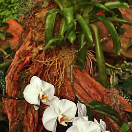 George Bostian - Orchids And A Tree Stump 002