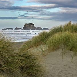 Inge Riis McDonald - Oregon coast 365-70