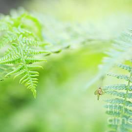 Charmian Vistaunet - Oregon Ferns