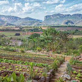Joan Carroll - Organic Farm Vinales Valley Cuba