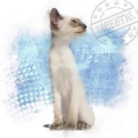 Oriental Cat Paint No 01 by Mia Stedt