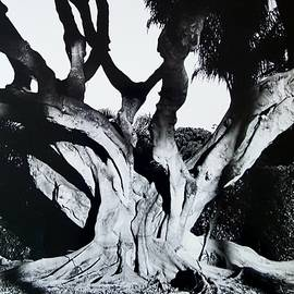 Original Banyan Tree by Rob Hans