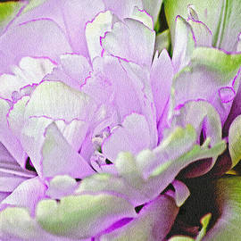 Lali Kacharava - Original tulip
