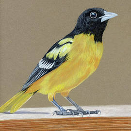 Laurie With - Oriole