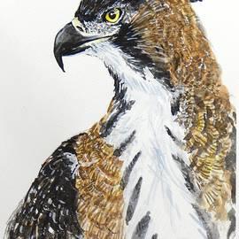 Ornate Hawk Eagle Portrait by Anwar Sahib
