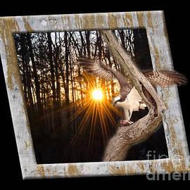 Donna Brown - Osprey At Sunset  Black