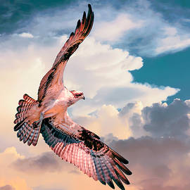 Rick Higgins - Osprey Flying to The Heavens