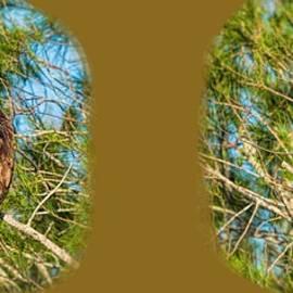 Osprey Vigilance Mugshot by John M Bailey