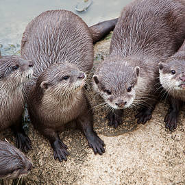 Otters by Playfulfoodie