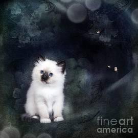 Monique Hierck - Our Cat World