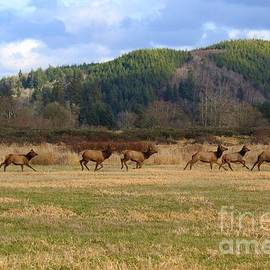 Jane Powell - Out for a run- wild elk