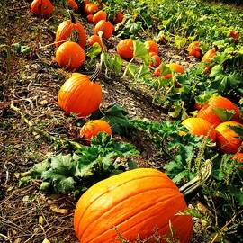Out In The Big Pumpkin Patch by Angela Rath