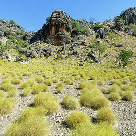 Genevieve Vallee - Outback Spinifex