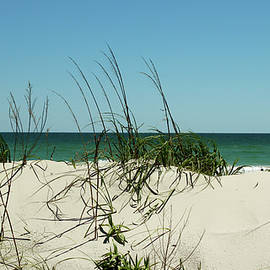 Over The Dunes by Cynthia Guinn