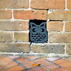 Linda Covino - Owl drain hole
