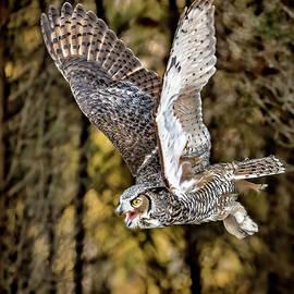 Pat Eisenberger - Owl in Flight